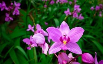 Orchid 3 Mac wallpaper