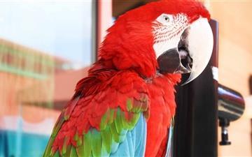 The Parrot Mac wallpaper