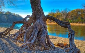 Rooted Mississippi River Mac wallpaper