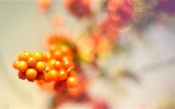 Wild Berries MacBook Air wallpaper