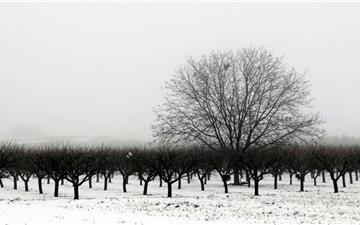 Winter Tree Mac wallpaper