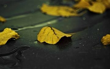 Yellow Leaves On Wet Asphalt Mac wallpaper