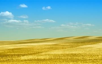 Rolling Gold Mac wallpaper