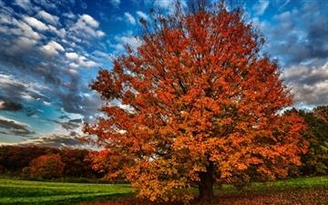 Autumn Tree Mac wallpaper