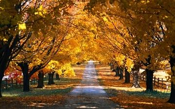 Tree Tunnel Road Autumn Mac wallpaper