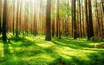 Beautiful Forest Scenery Mac wallpaper