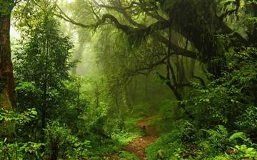 Humid Tropical Path All Mac wallpaper