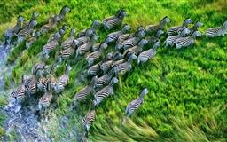 Mac Os X Retina Zebras