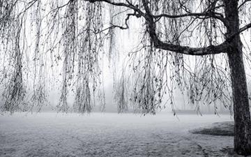 Spring Mist Black And White Mac wallpaper