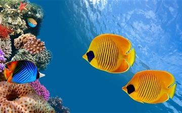 Desktop Aquarium Mac wallpaper