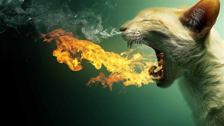 Flaming Cat Mac Wallpaper