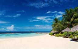Palm Trees On Ocean Coast