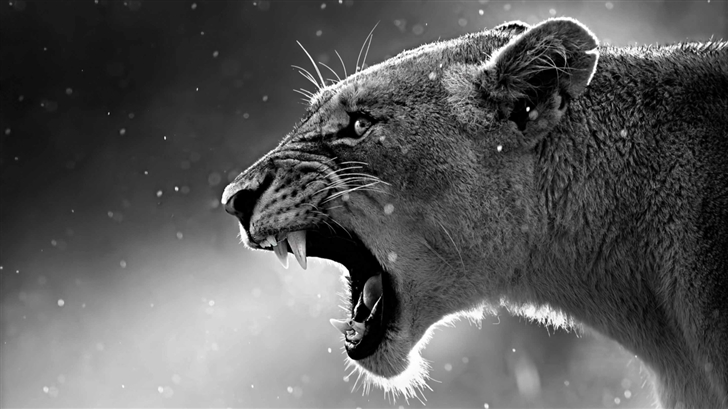 The Lioness Mac Wallpaper