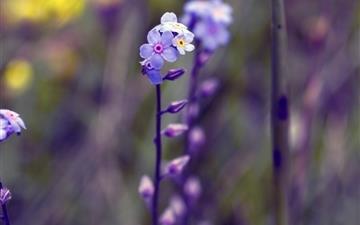 Violet Flowers Mac wallpaper