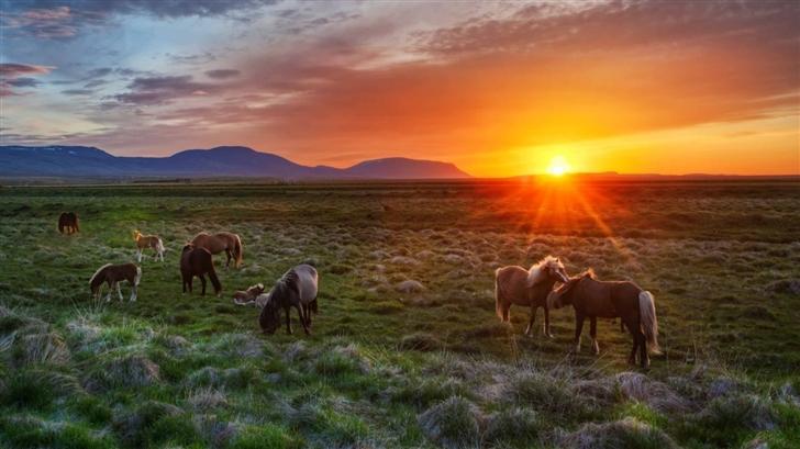 Wild Horses At Sunset Mac Wallpaper
