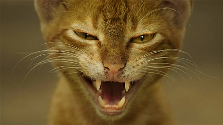 Wild Cat Mac Wallpaper