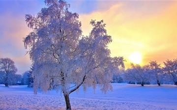 Winter Evening Light Mac wallpaper