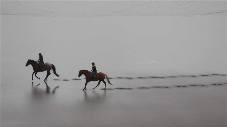 Riding Horse Mac Wallpaper