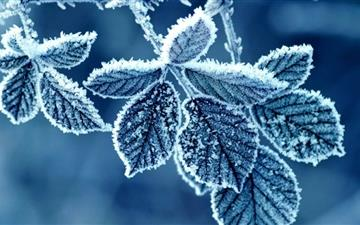 Frozen Leaves Mac wallpaper