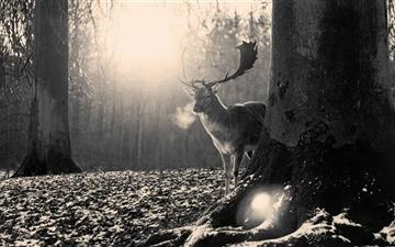 Stag Winter MacBook Air wallpaper