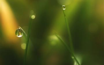 Grass Dew Bokeh 3 Mac wallpaper