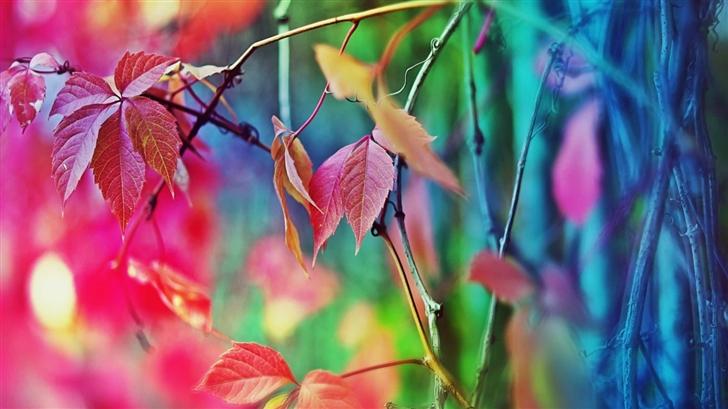 Colorful Leaves Mac Wallpaper