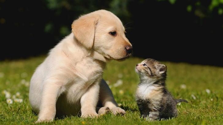 Cute Friendship Mac Wallpaper