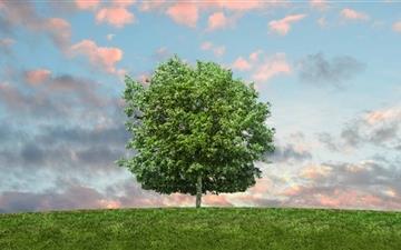 Hill Tree Mac wallpaper
