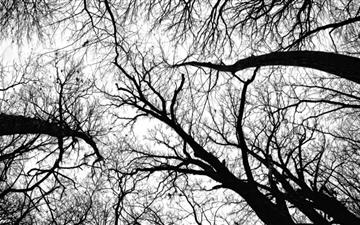 Pecan Grove Black And White All Mac wallpaper