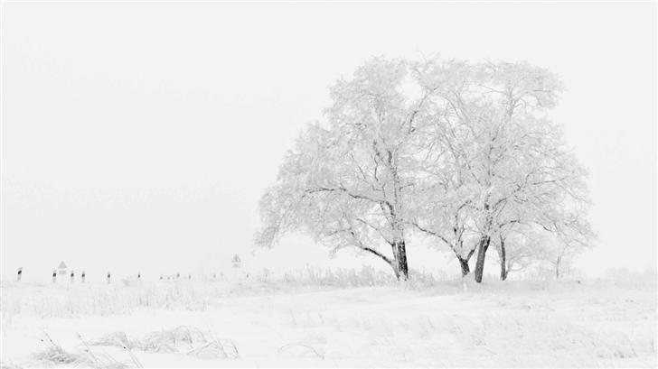 White Winter Mac Wallpaper