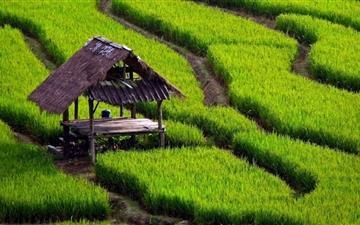 Rice Field Landscape Mac wallpaper