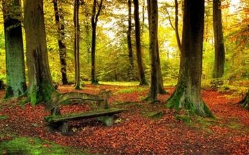 Beautiful Forest Autumn Mac wallpaper