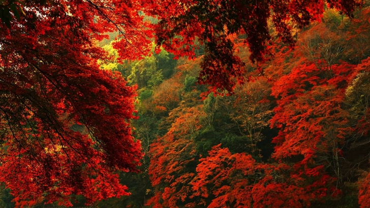 Red And Green Forest Mac Wallpaper