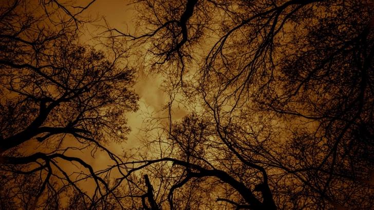 Dark Charmed Forest Mac Wallpaper