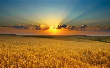 Golden Summer Field Mac wallpaper