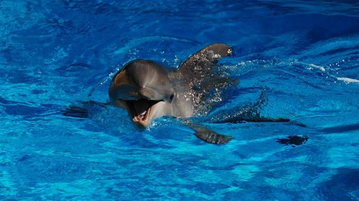 Happy Dolphin Mac Wallpaper
