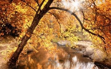 Creek Autumn Mac wallpaper