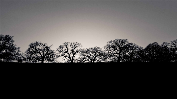 Horizon Trees Mac Wallpaper