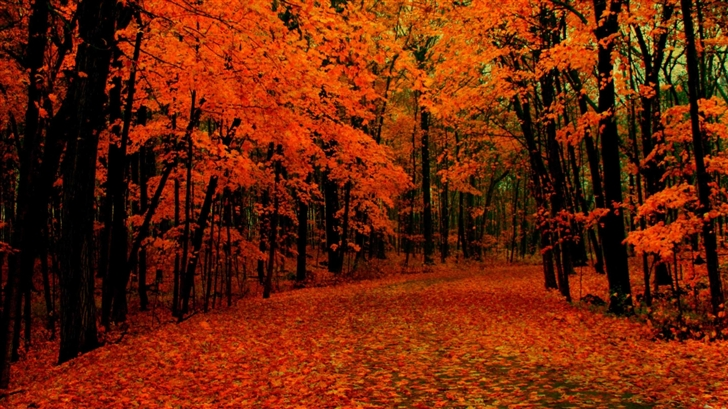 Fall Path Mac Wallpaper