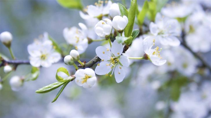 Spring Blossoms Mac Wallpaper