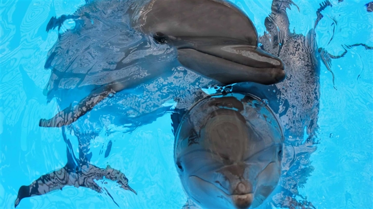 The Dolphin Mac Wallpaper