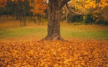 Autumn Tree Mac wallpaper