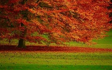 Beautiful Orange Tree  Mac wallpaper