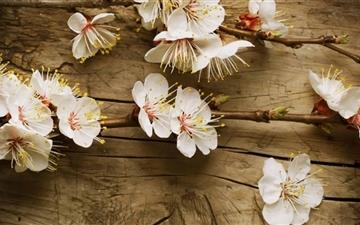 Apple Flowers All Mac wallpaper