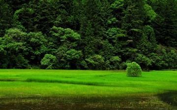Green View Mac wallpaper