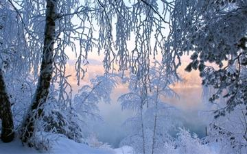 Beautiful Winter Froest All Mac wallpaper
