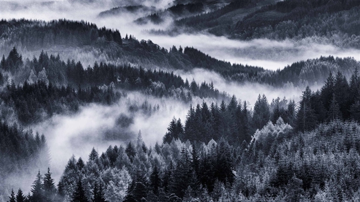 Early Morning Mist Forest Mac Wallpaper