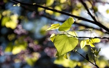 Tree Leaves Bokeh Mac wallpaper