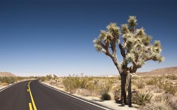 Joshua Tree Desert Road Mac wallpaper