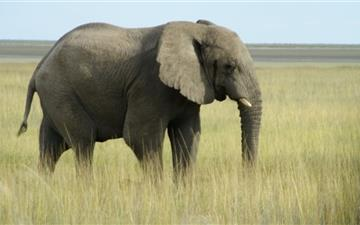 African Elephant Namibia All Mac wallpaper